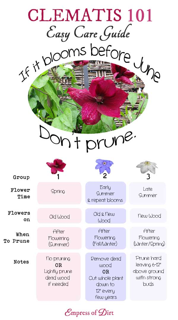 Clematis-101-Easy-Care-Guide-C2bb.jpg